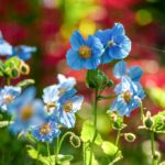 Heritage in Bloom – A spring tour of Canada's historic gardens