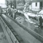 Lieu historique national Gulf of Georgia Cannery – La « conserverie monstre » de la Colombie-Britannique regorge encore d'histoires